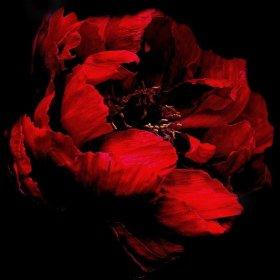 Самые романтичные цветы ко Дню святого Валентина